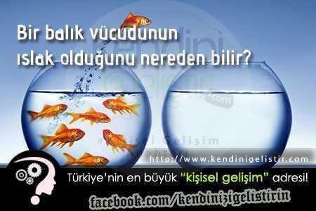 Bir balık vücudunun ıslak olduğunu nereden bilir