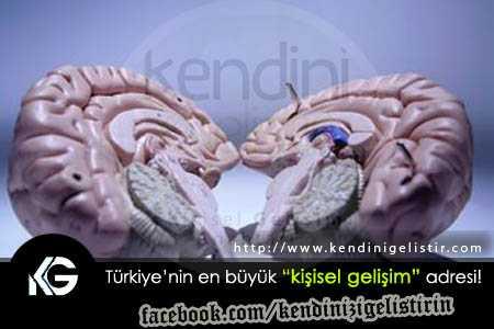 beyin-nasil-calisir