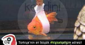 engelli balık