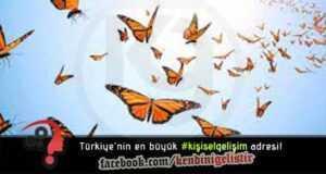 Kelebek Yolculuğu