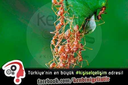 kişisel gelişim ve karıncalar